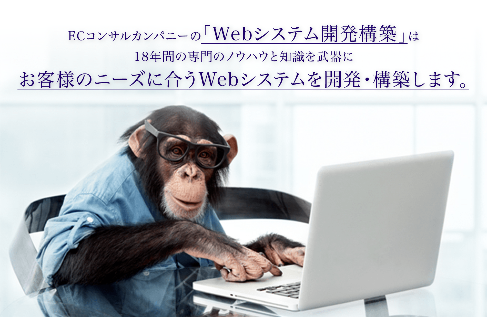 ECコンサルカンパニーの「Webシステム開発構築」は18年間の専門のノウハウと知識を武器にお客様のニーズに合うWebシステムを開発・構築します。